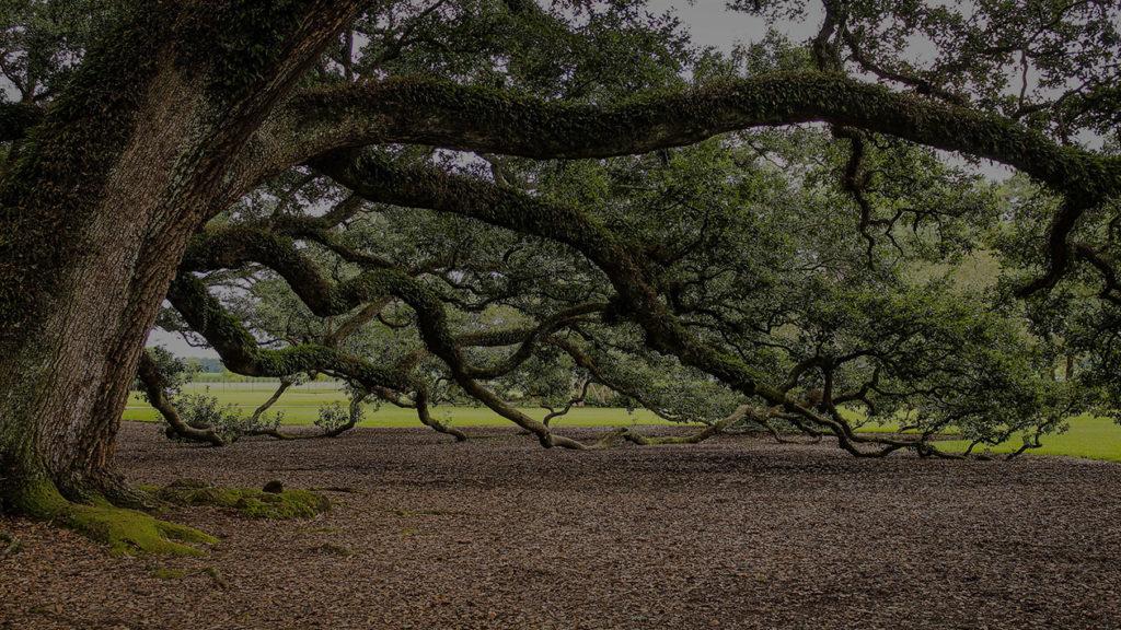Lakeland Tree Pruning