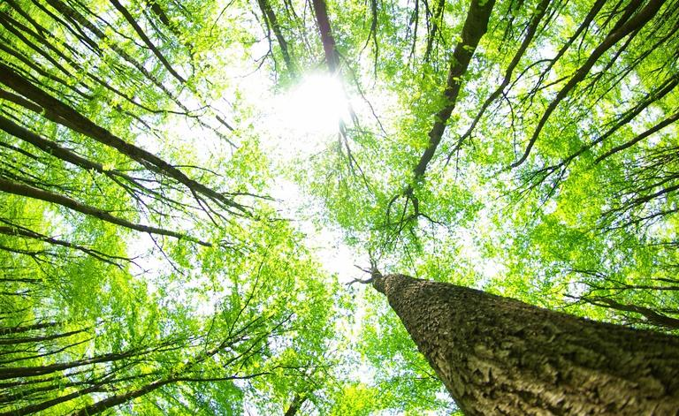 Lakeland Tree Service