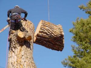 Lakeland tree removal