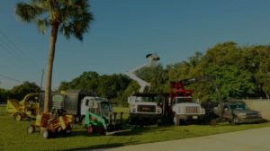 tree trimming service in Lakeland
