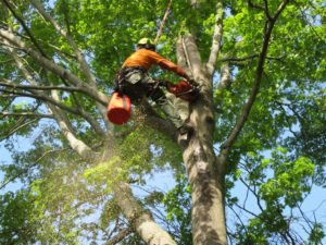 Mulberry Tree Service