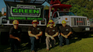 Winter Haven tree trimming