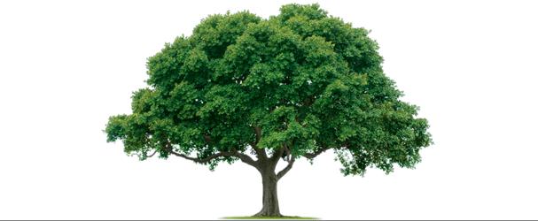 Tree Service Lakeland