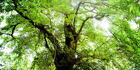 Kathleen Tree Service