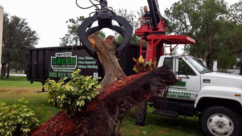 Lakeland Tree Trimming