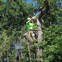 Avon Park Tree Removal